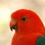 Pretty parrots.