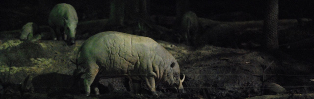 A babirusa. (direct translation means Pig Deer)