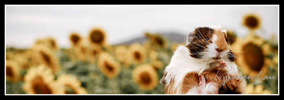 Sunflowers_By_Jiaren_Lau-0488